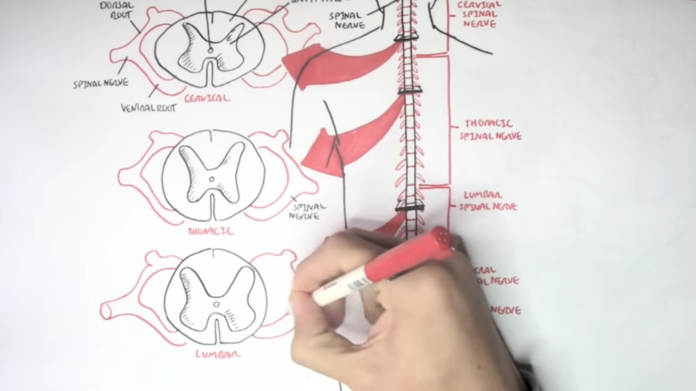 11 Best Medical Youtube Channels for Medical Students
