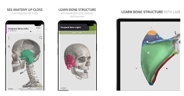 9- Anatomyka Skeleton
