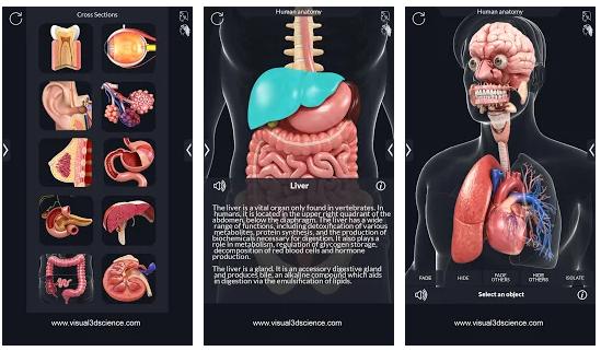 12- My Organs Anatomy