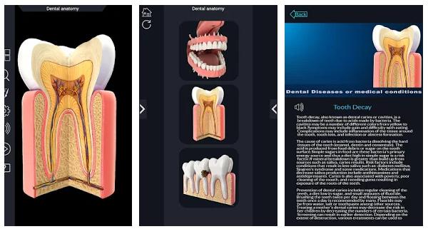 Dental Anatomy Pro.